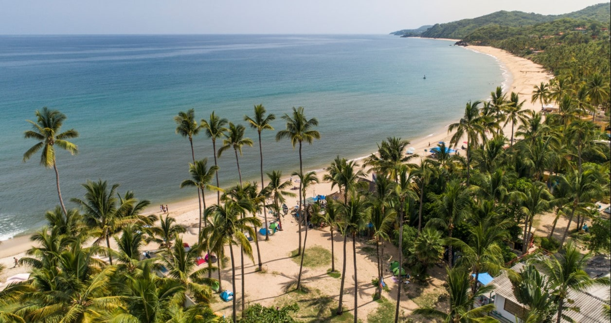 Aerial view of seashore with lots of coconut trees